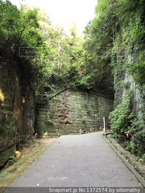 猿島の遊歩道風景の写真・画像素材[1372574]