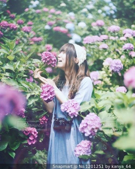 紫陽花の写真・画像素材[1201251]