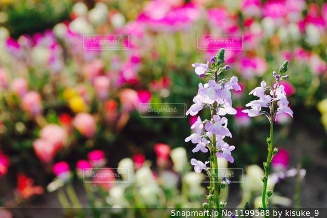 近くの花のアップの写真・画像素材[1199588]