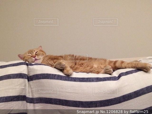 ベッドの上で横になっている猫の写真・画像素材[1206828]