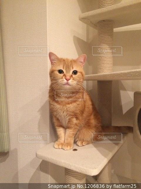 テーブルの上に座って猫の写真・画像素材[1206836]