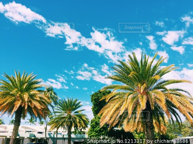ヤシの木とビーチの写真・画像素材[1213317]