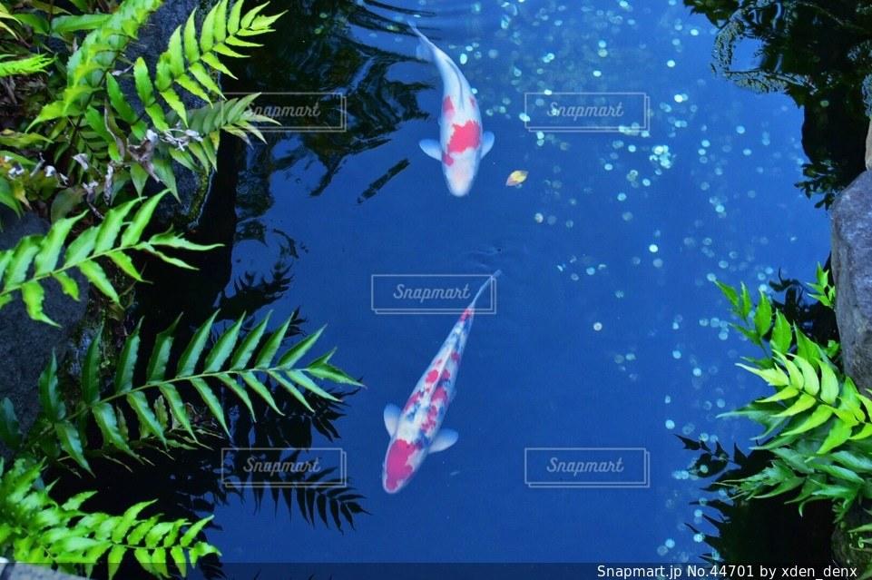 魚の写真・画像素材[44701]