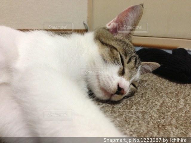 昼寝するネコの写真・画像素材[1223067]