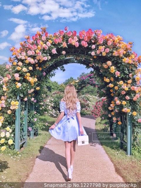 バラ園のバラアーチの前に立っている女性の写真・画像素材[1227798]