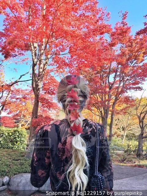 もみじでヘアアレンジの写真・画像素材[1229157]