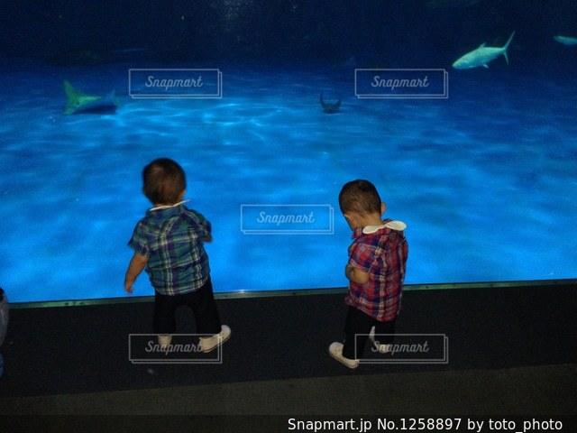 双子揃って水族館探索の写真・画像素材[1258897]