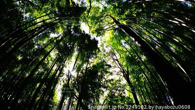 近くの木のアップの写真・画像素材[1249502]