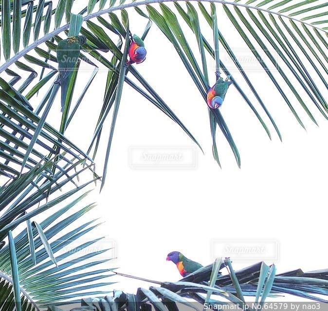 カラフルな鳥が遊んでいるの写真・画像素材[64579]