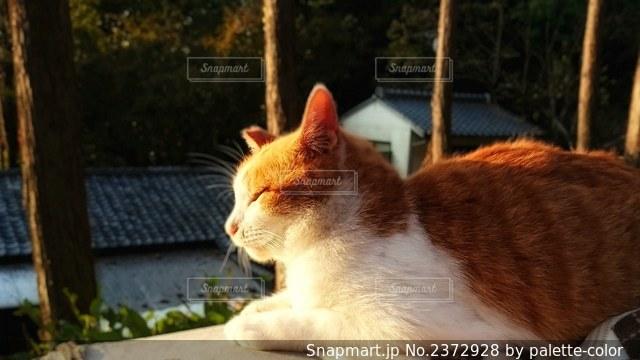 猫の日向ぼっこの写真・画像素材[2372928]