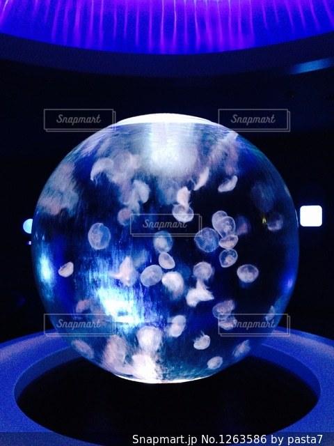 新江ノ島水族館の幻想的なクラゲの写真・画像素材[1263586]
