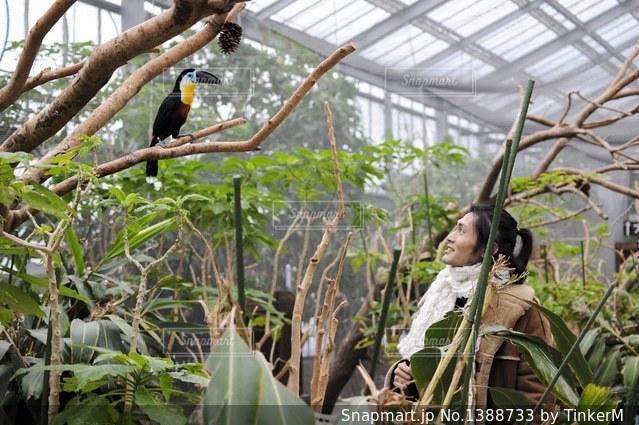 鳥好き男子の写真・画像素材[1388733]