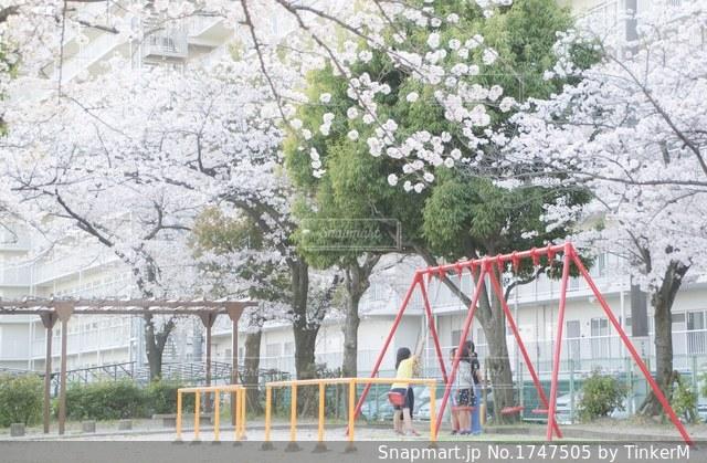 春の公園の写真・画像素材[1747505]