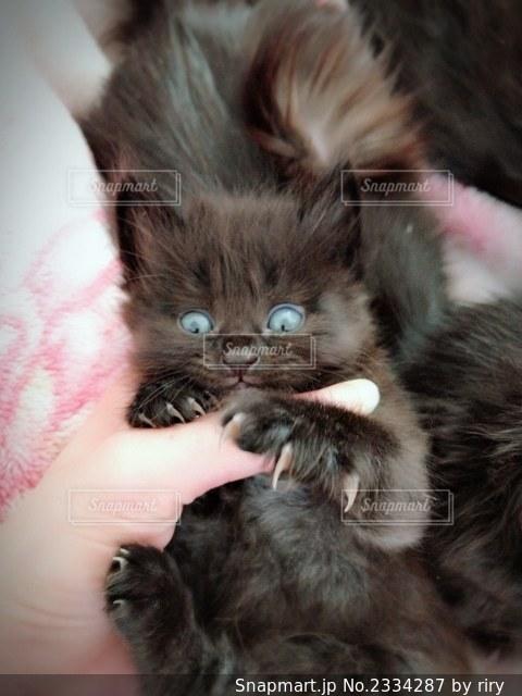 猫をふりする人の写真・画像素材[2334287]