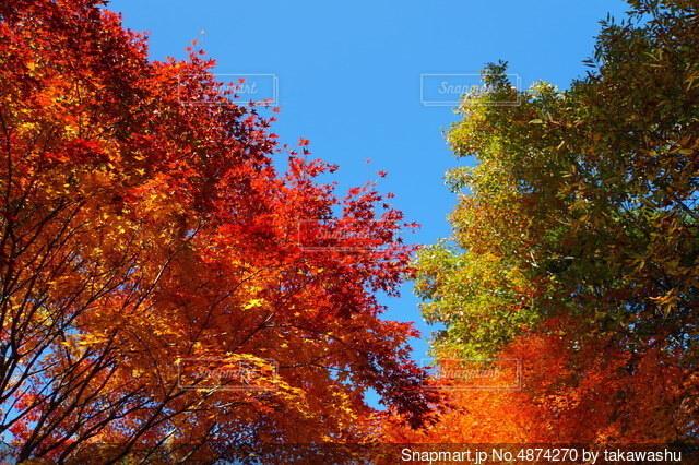 秋の彩りの写真・画像素材[4874270]