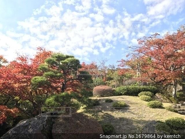 庭の植物の写真・画像素材[1679864]