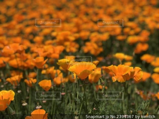 花の写真・画像素材[2394367]