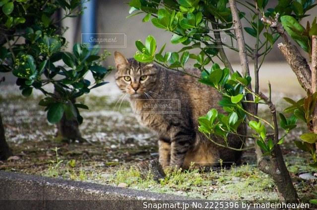 庭に座っている猫の写真・画像素材[2225396]