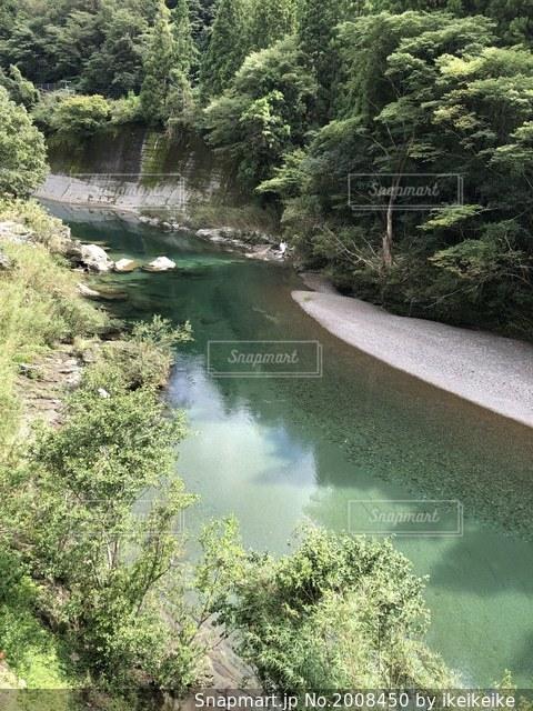 森林の写真・画像素材[2008450]