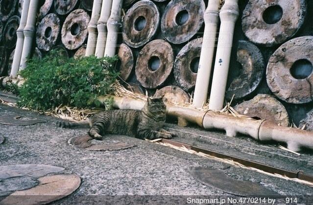 地面でくつろぐ猫ちゃんの写真・画像素材[4770214]