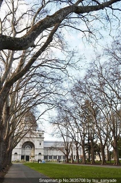 アーチ状の木々の写真・画像素材[3635708]