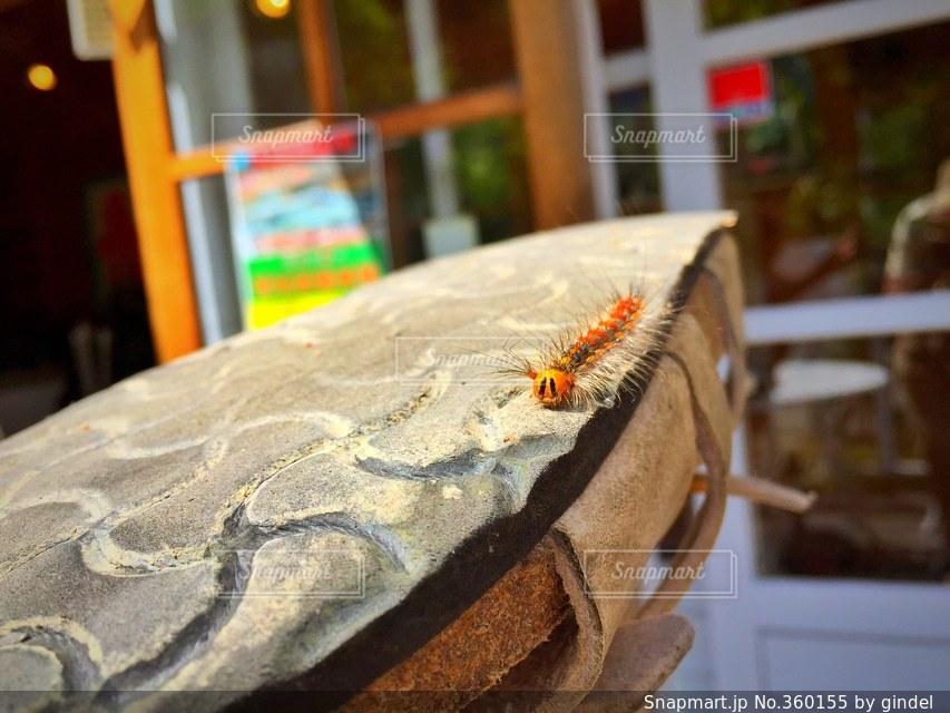自然,可愛い,昆虫,毛虫