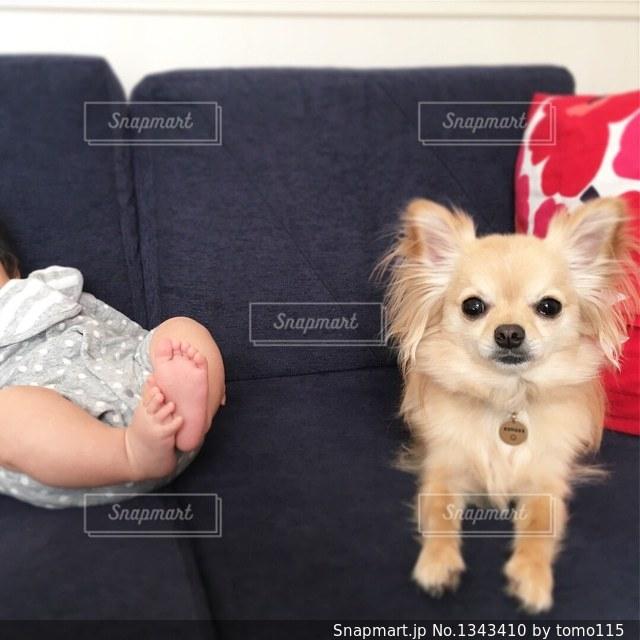 犬の写真・画像素材[1343410]