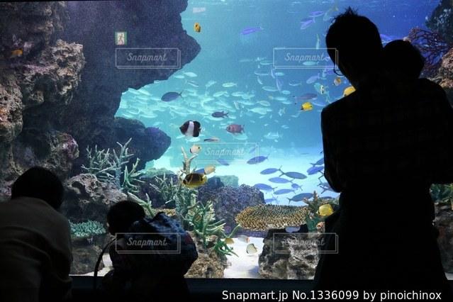 みんなで水族館の写真・画像素材[1336099]