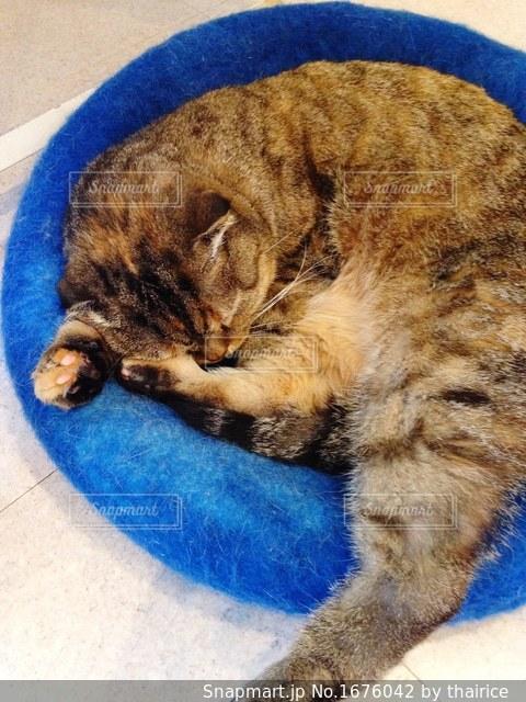 クッションの上で眠る猫の写真・画像素材[1676042]