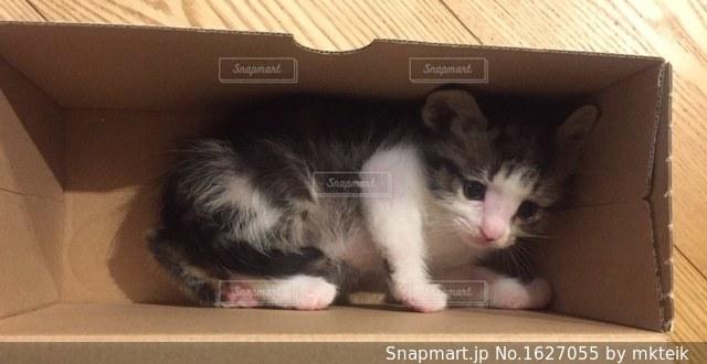 ダンボールに入ってる子猫の写真・画像素材[1627055]