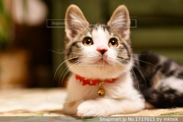 近くに猫のアップの写真・画像素材[1717015]