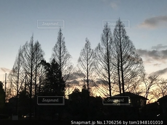 公園の樹々のシルエットの写真・画像素材[1706256]