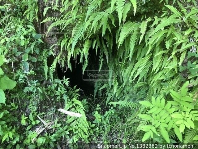 森の中の緑の植物の写真・画像素材[1382362]