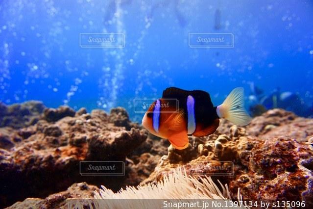 近くの岩の上の魚のアップの写真・画像素材[1397134]