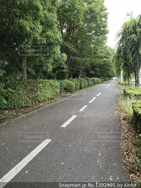新緑の通学路の写真・画像素材[1392995]