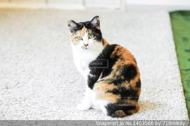 地面に座っている猫の写真・画像素材[1403566]
