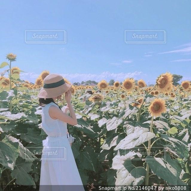 ひまわり畑と女の子の写真・画像素材[2146047]