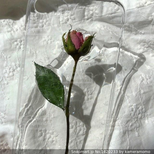花の写真・画像素材[1420233]