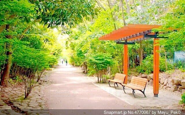 公園のベンチと奥へ続く道の写真・画像素材[4770067]