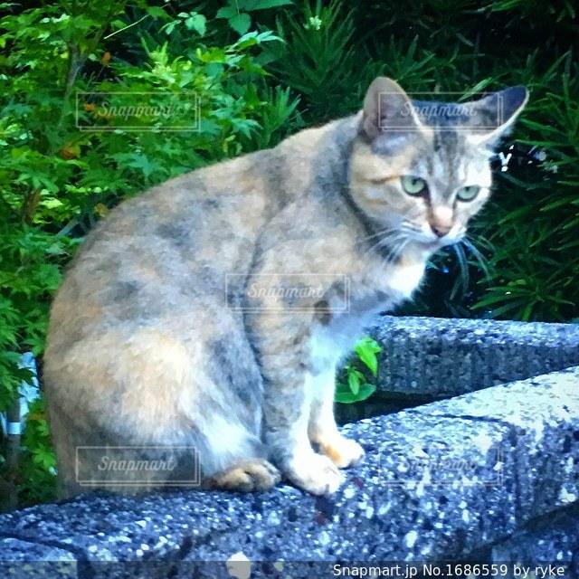 塀の上に座っている猫の写真・画像素材[1686559]