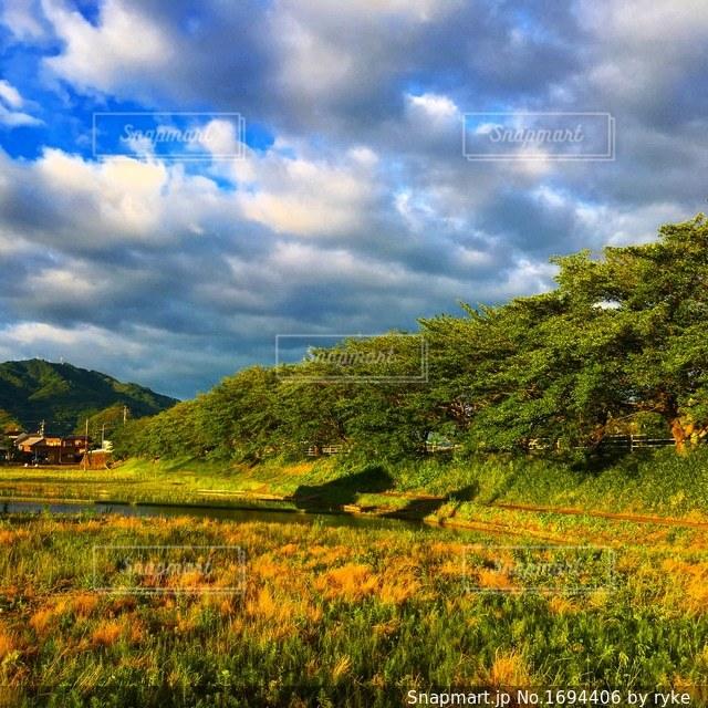 田んぼと空と木の写真・画像素材[1694406]