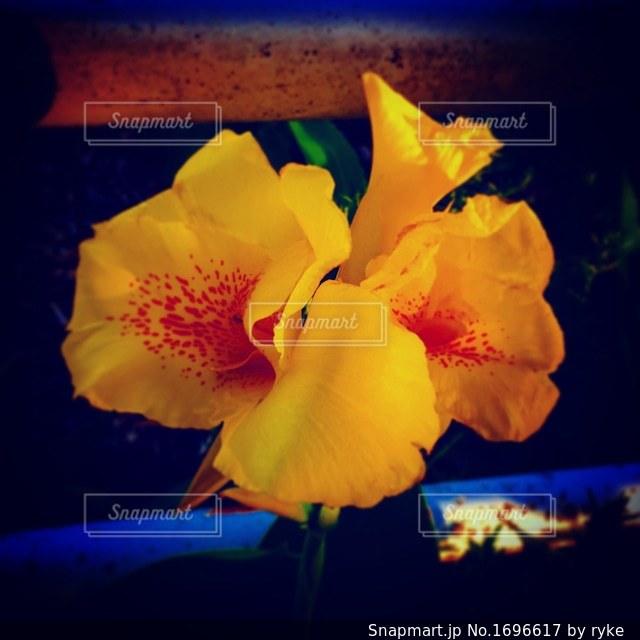 近くの花のアップの写真・画像素材[1696617]