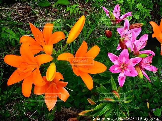 花のクローズアップの写真・画像素材[2227419]