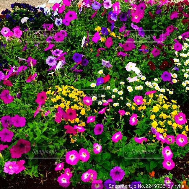 花壇の写真・画像素材[2249735]