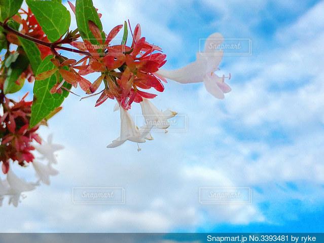 花を持ちながら空中を飛ぶ人の写真・画像素材[3393481]
