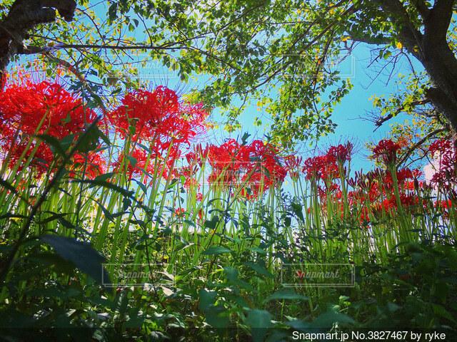 木の前にある花園のクローズアップの写真・画像素材[3827467]