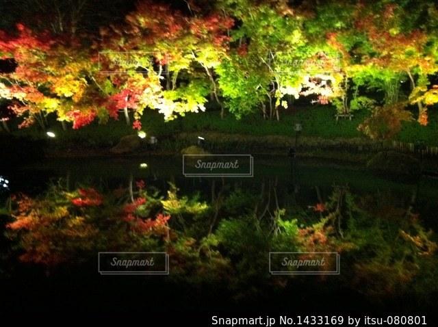 自然の写真・画像素材[1433169]