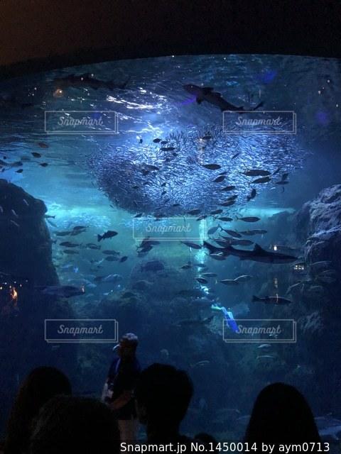 新江ノ島水族館の写真・画像素材[1450014]