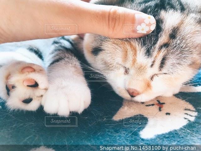 可愛い猫の寝顔の写真・画像素材[1458100]