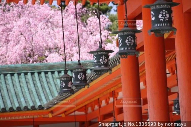 平安神宮の美しい桜の風景の写真・画像素材[1836693]
